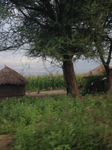 A Maasai boma passed on the way to our tented lodge.