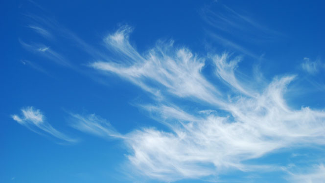 feathered sky